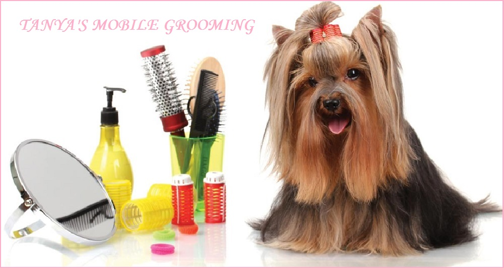 Mobile Grooming Houston Offered By Tanya Is The Number One Grooming Place For Your Pet!